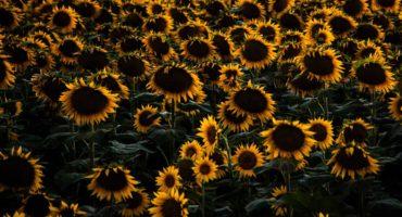 beautiful-bloom-blooming-546232